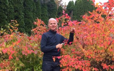 Organic Vegetable Gardening: A Beginner's Guide