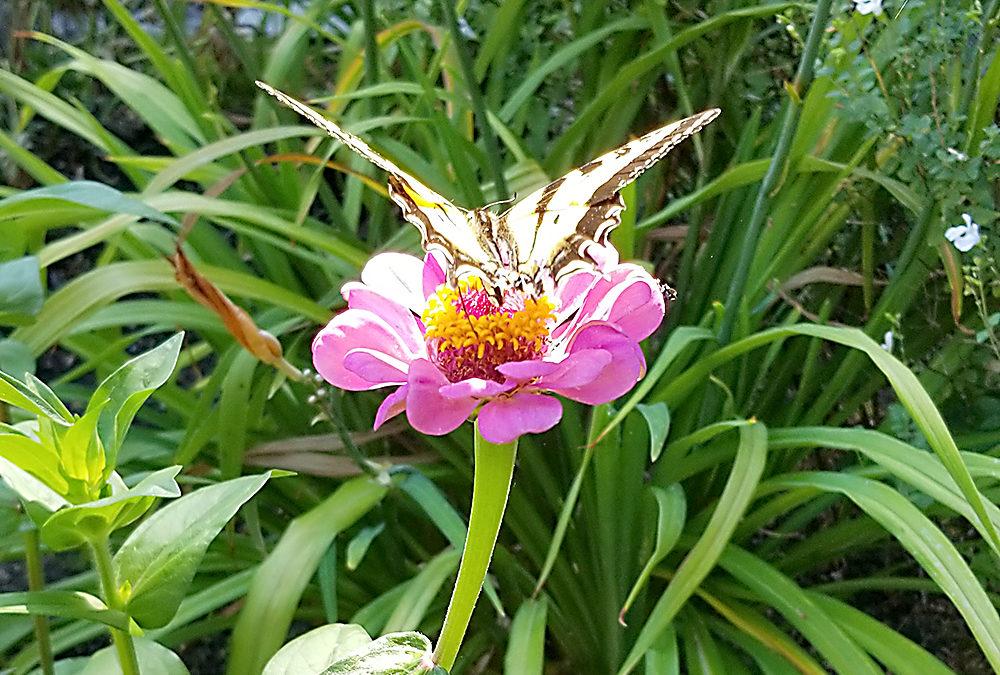 Pollinators: Nature's Gardeners