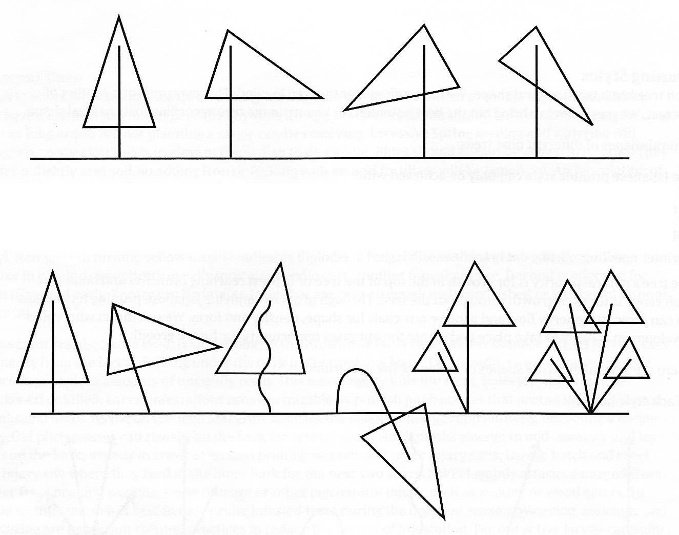pine tree shapes